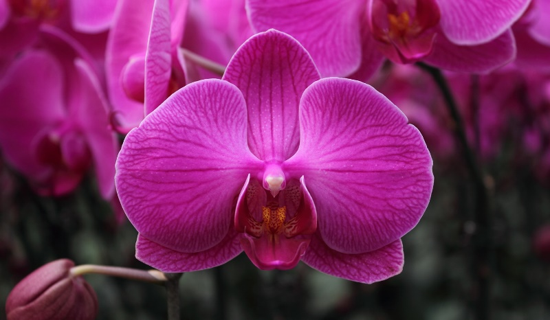 THE FIRST TIME HOCHIMINH CITY HOSTS THE ORCHID FESTIVAL