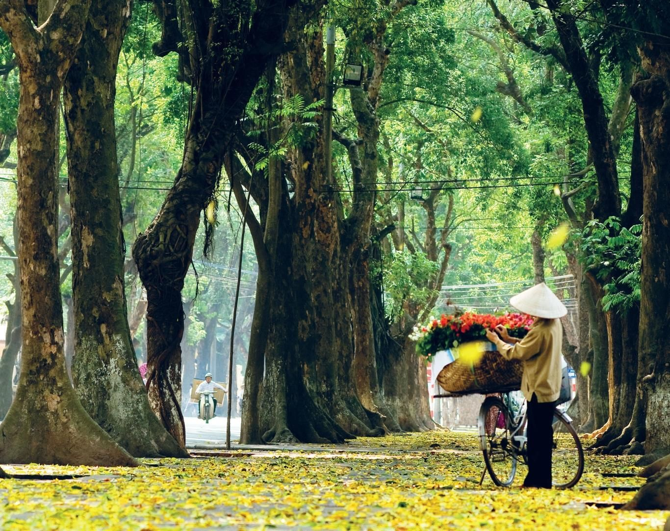 Autumn in Hanoi