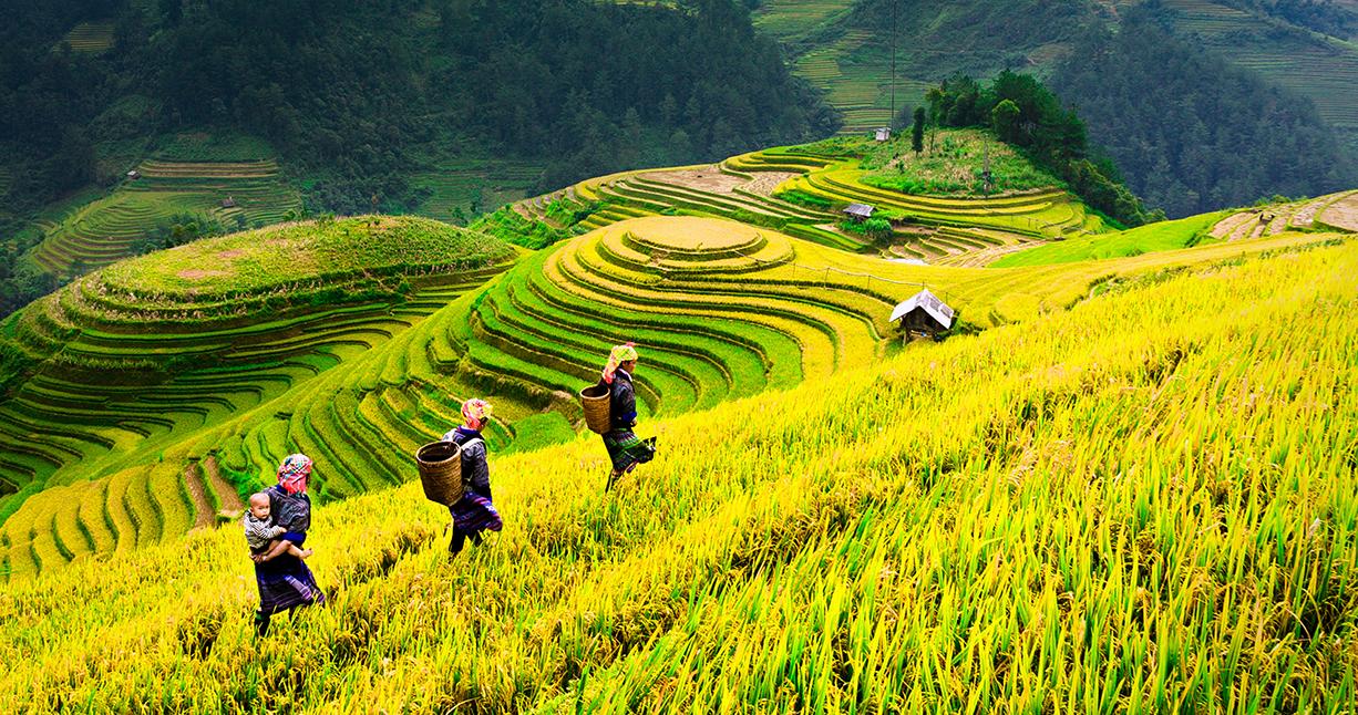 Vietnam full discovery