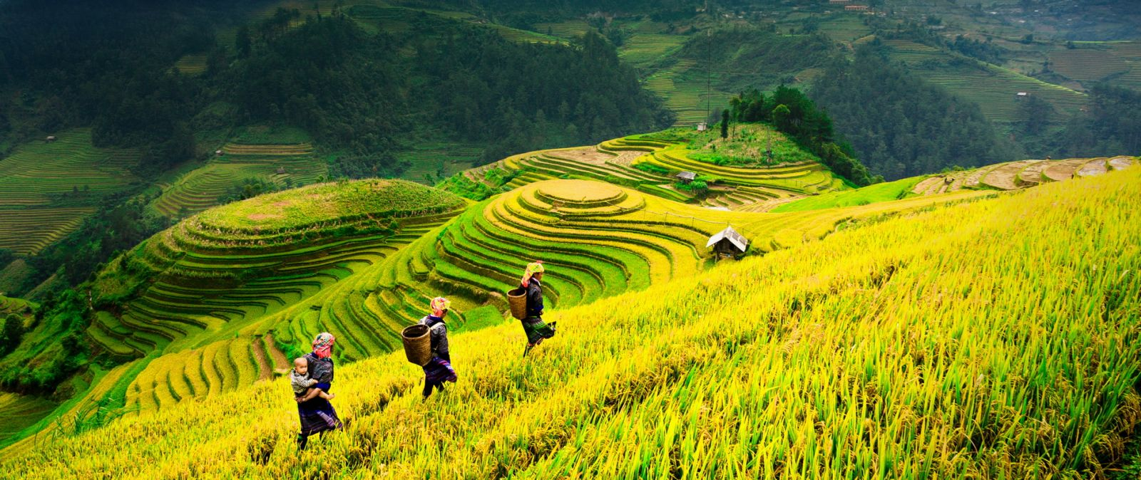 VIETNAM AUTUMN DESTINATIONS: GOLDEN SEASON IN SAPA